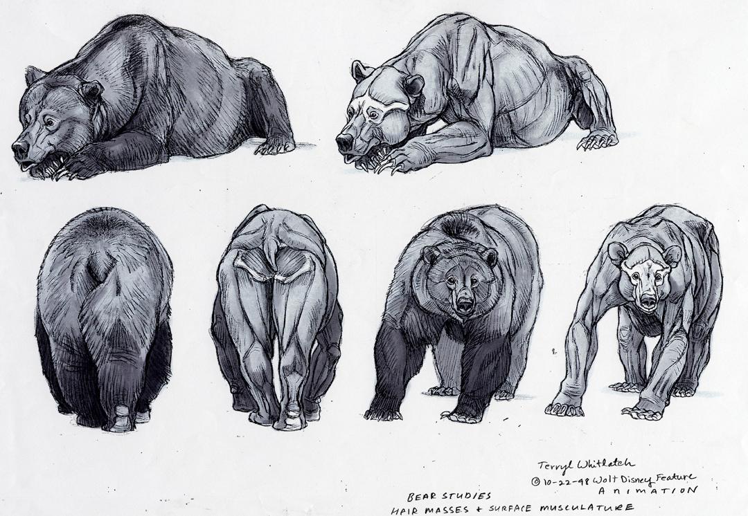 Drawn polar  bear disney REF: on  Pinterest images