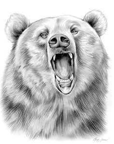 Drawn grizzly bear pencil drawing Drawings Drawings Black Pencil in