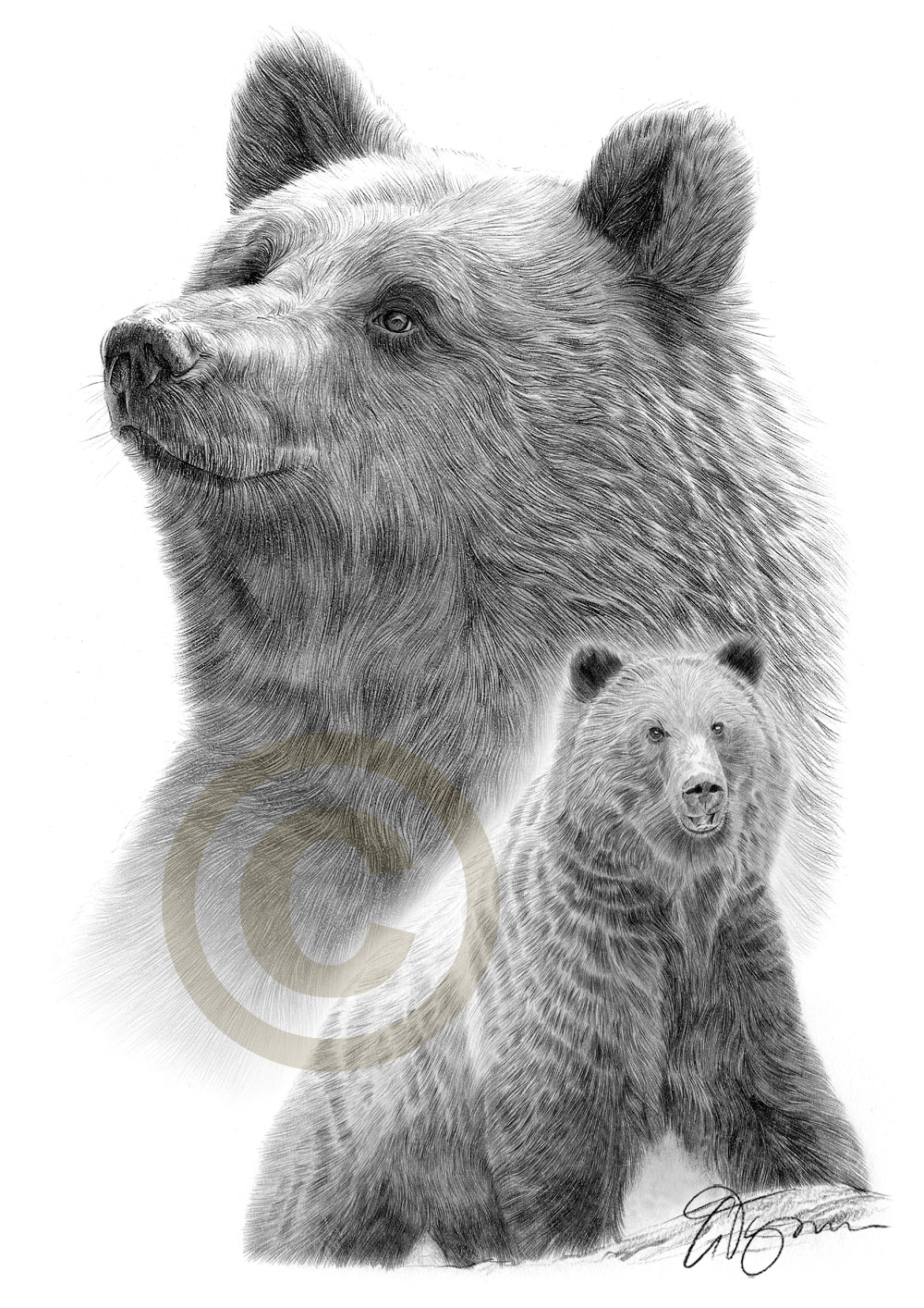 Drawn grizzly bear pencil drawing Acrylic brown A3 Gary oil