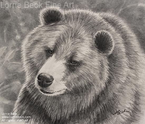 Drawn grizzly bear pencil drawing Zoom: Work Wildlife Pencil Wildlife