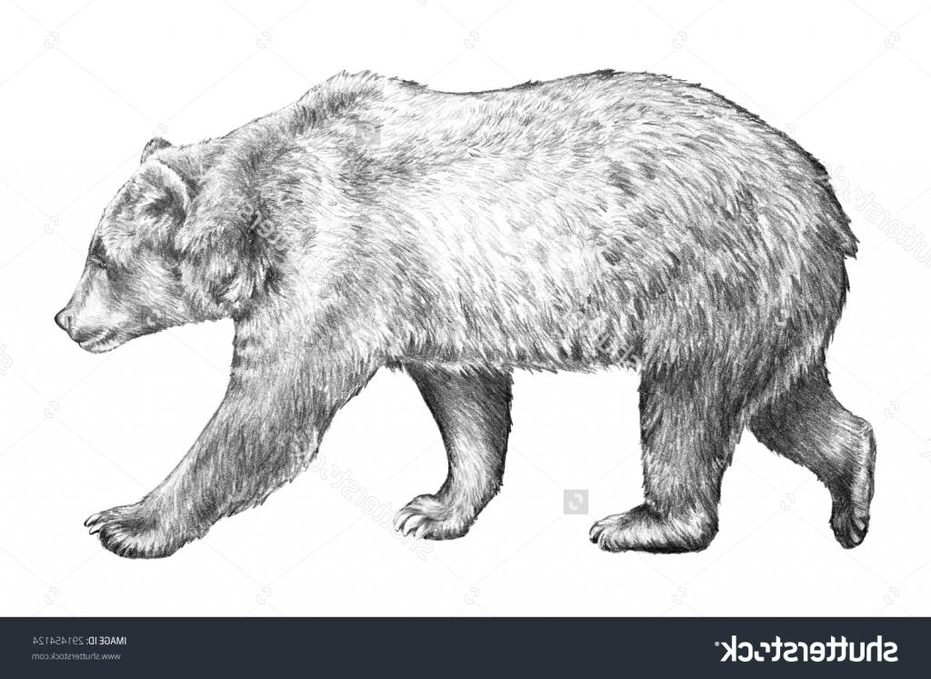 Drawn grizzly bear pencil drawing Bear Pencil Drawing Bear Hand