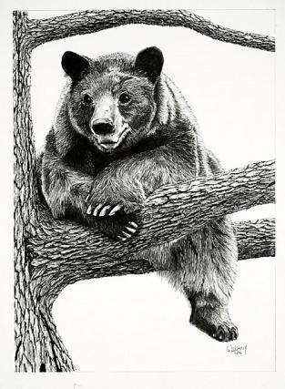 Drawn grizzly bear pencil drawing Bear of Pencil Bear Pencil