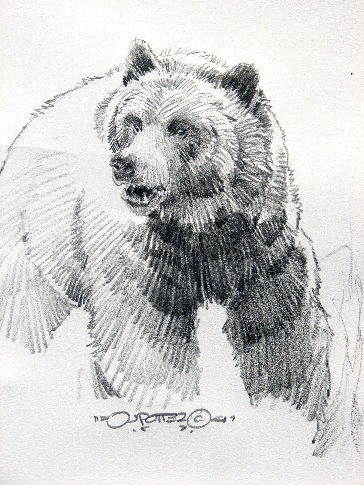 Drawn bear sketch Woes