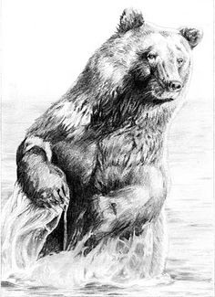 Drawn grizzly bear pencil drawing Fur Metal and Bear Blog: