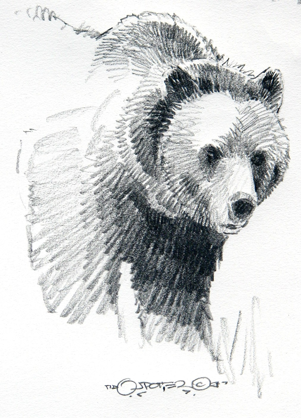 Drawn grizzly bear pencil drawing Paper and Sketches pencil