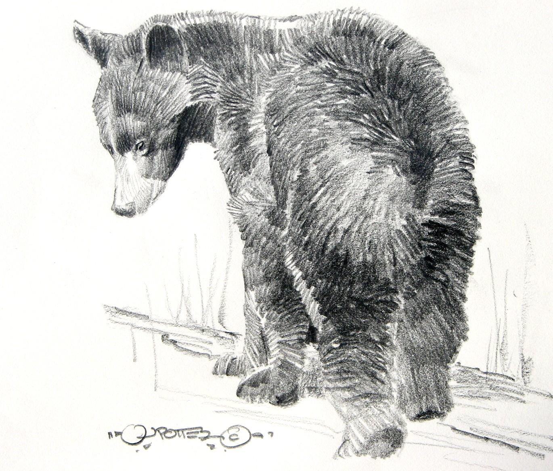 Drawn bear sketch On Sketches