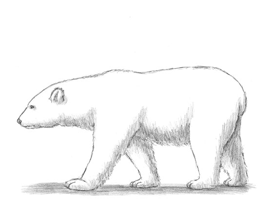 Drawn polar  bear real baby #1
