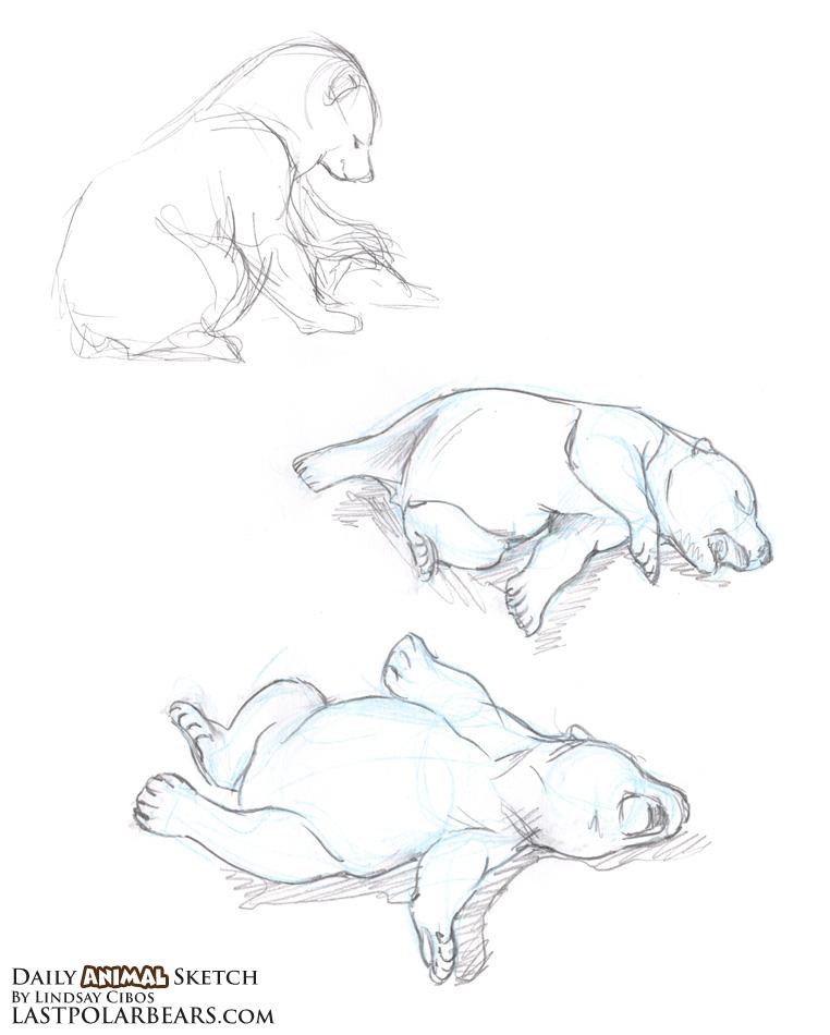 Drawn polar  bear baby animal Daily the – Animal Sketch