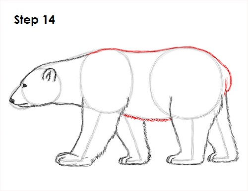 Drawn polar  bear step by step Bear 14 How Draw to