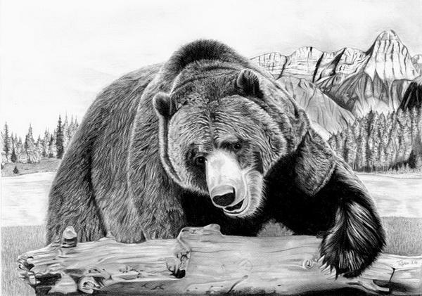 Drawn grizzly bear roar Grizzly photo#5 Bear roar drawing