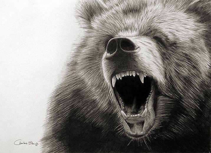 Drawn grizzly bear roar  bear ideas Grizzly 20+