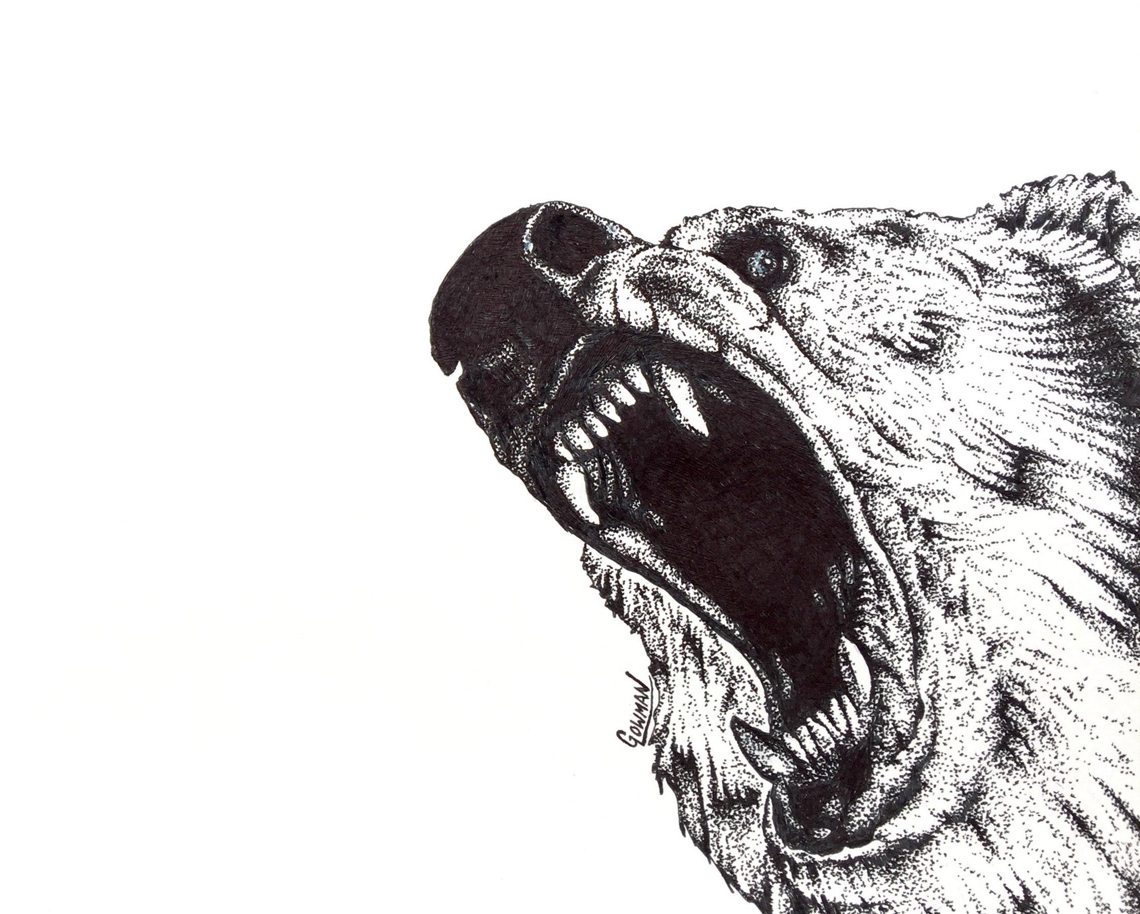 Drawn grizzly bear roar  Wildlife YouTube Drawing Bear