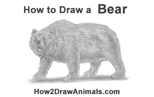 Drawn grizzly bear roar Grizzly How Growling Bear Bear