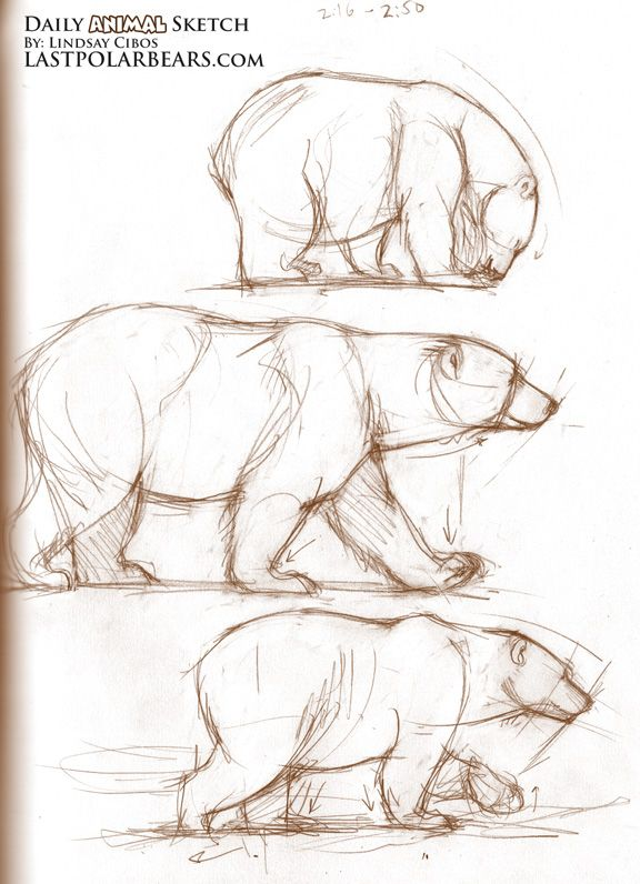 Drawn grizzly bear side view Sketches Pinterest a Bears want