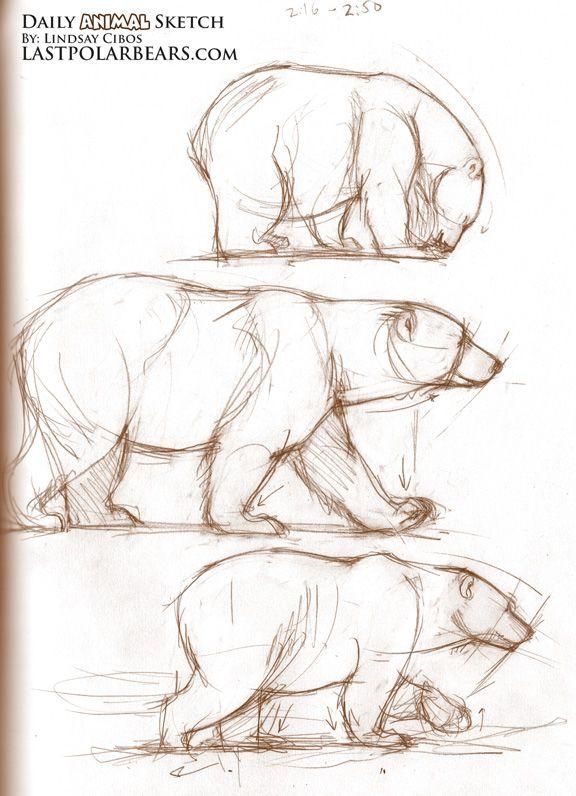 Drawn polar  bear side view Black/brown bear Pinterest Sketches Bear