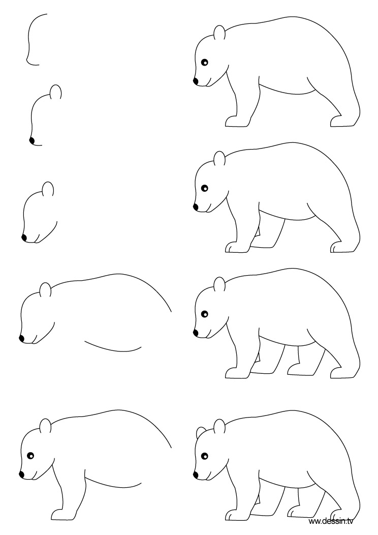 Drawn polar  bear simple For Grizzly to To a
