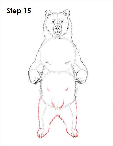 Drawn grizzly bear sketch Grizzly How Draw Bear (Grizzly)