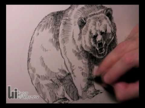 Drawn grizzly bear sketch Drawing Bear  shirts series)