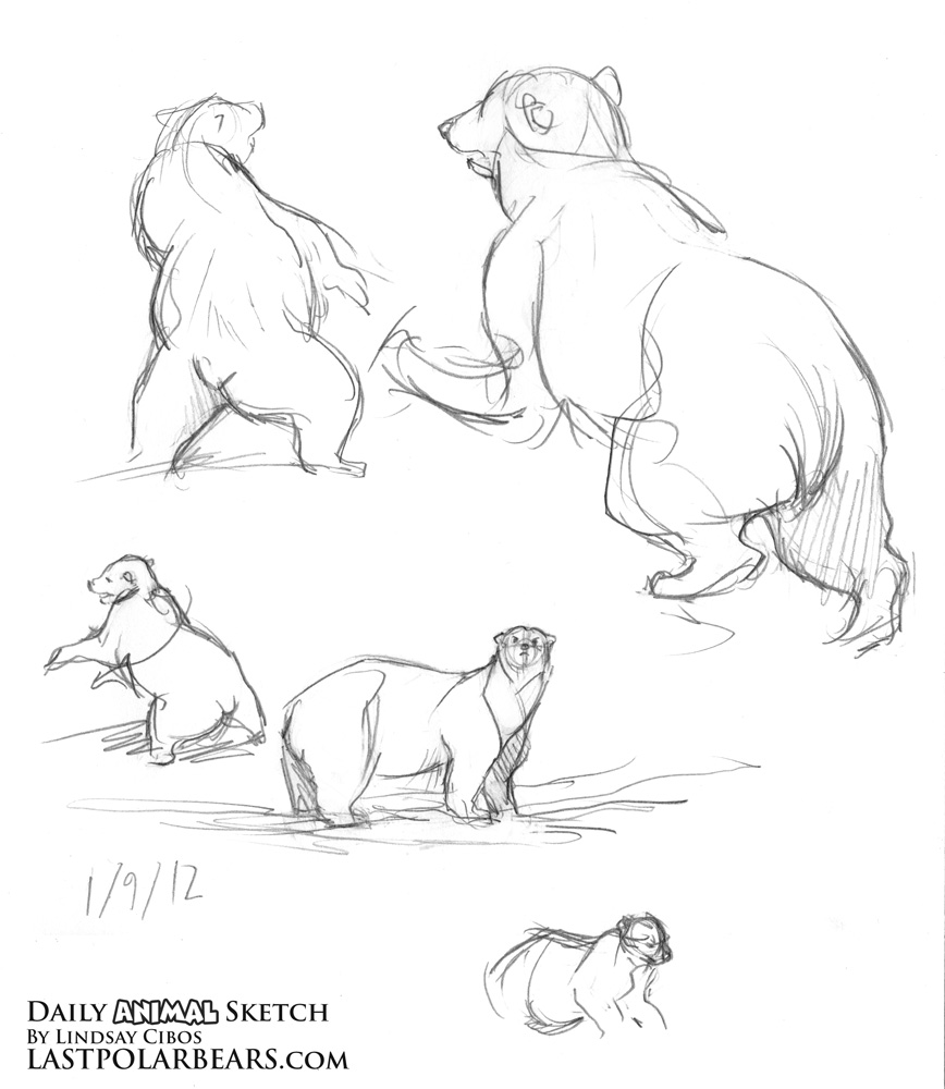 Drawn grizzly bear sketch – January Last art