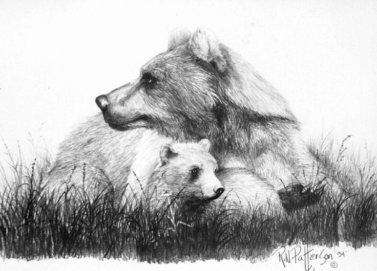 Drawn grizzly bear sketch Bear Mom Best Alert drawing
