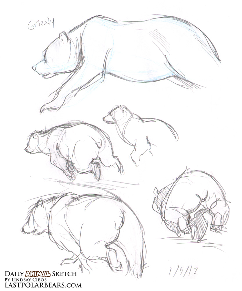 Drawn polar  bear running bear #4