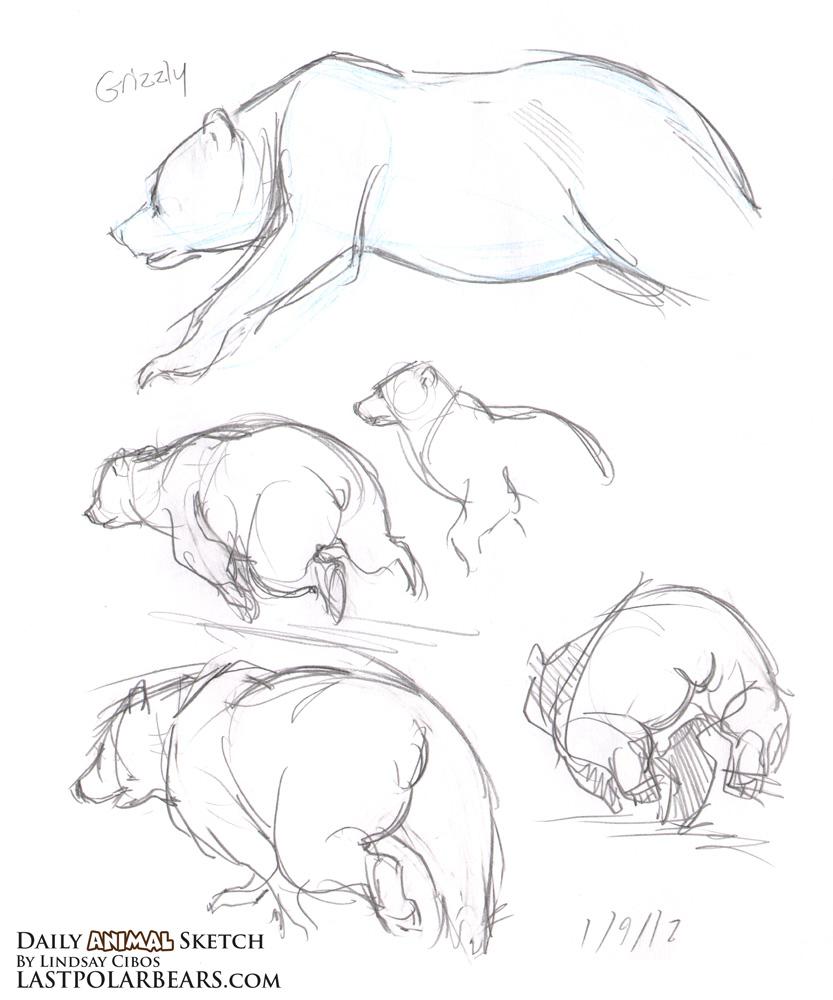 Drawn polar  bear running bear Bears – Last –