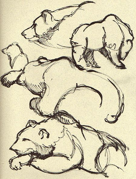 Drawn grizzly bear sketch Life this Art more Find