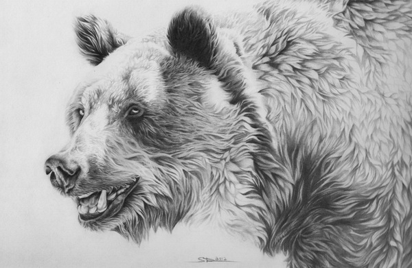 Drawn grizzly bear sketch And Bear 10+ 10 Drawings