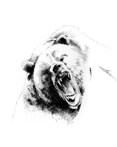 Drawn grizzly bear sketch Grizzly Grizzly  Grizzly A