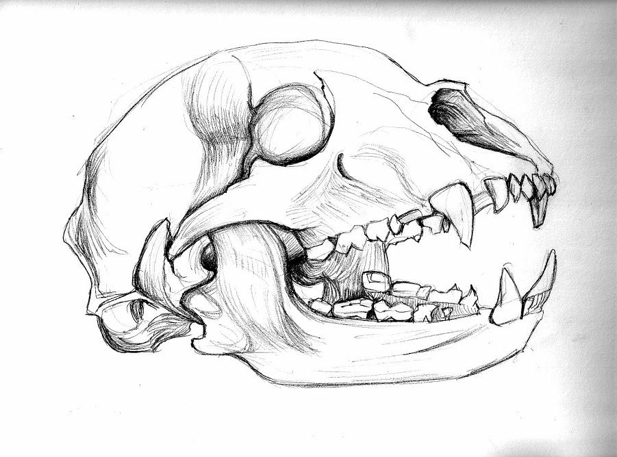 Drawn polar  bear skull BEAR Archives Posted Octo skull