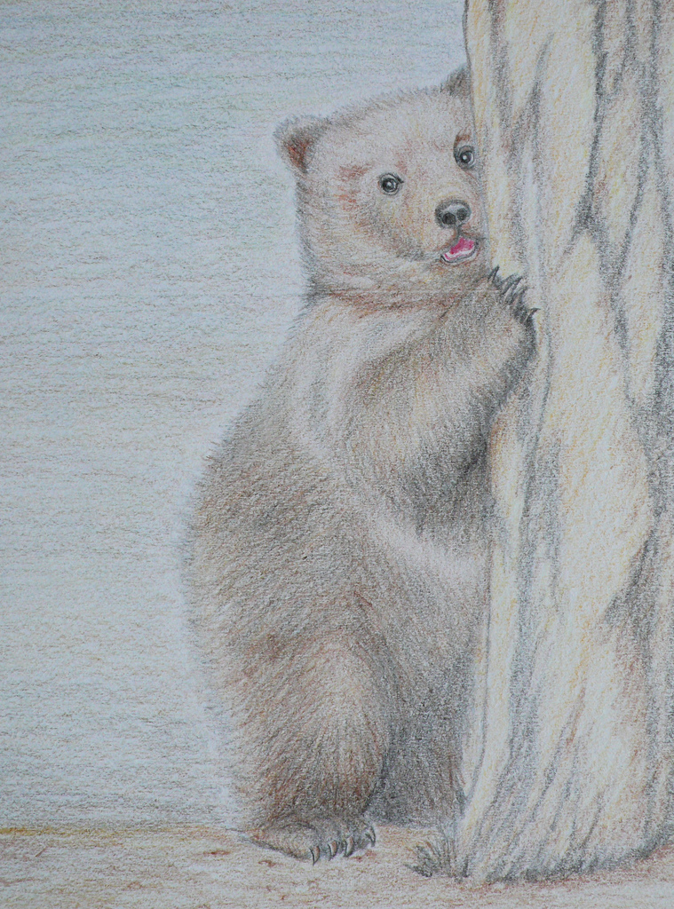 Drawn grizzly bear hand drawn  Color Color my first