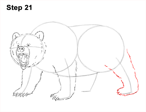 Drawn grizzly bear step by step How Draw Walking Draw Bear