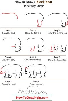 Drawn grizzly bear step by step How draw bear how black