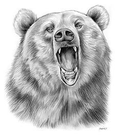 Drawn grizzly bear strong  Drawing Illustrated Colored Grizzly