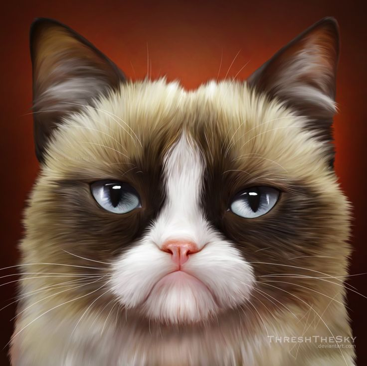 Drawn grumpy cat digital Cat and more this Pinterest
