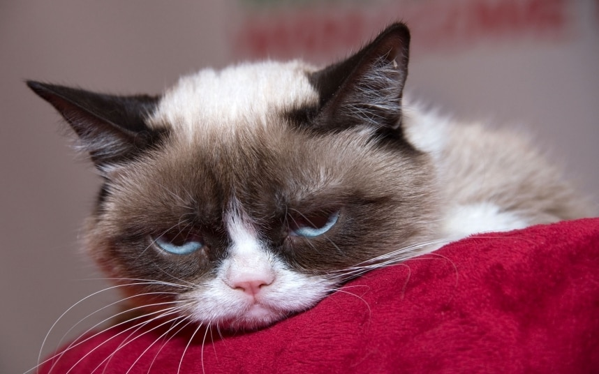 Drawn grumpy cat tired Sociopaths they The The best