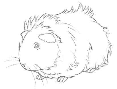 Drawn guinea pig Pig guinea Pinterest a pig
