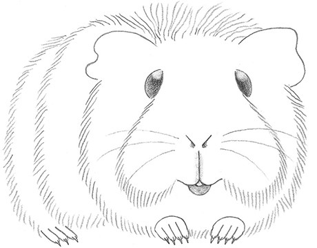 Drawn guinea pig Pig Draw To Coloring jpg