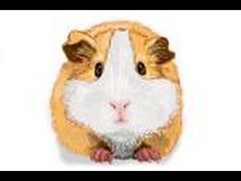 Drawn guinea pig Pig Guinea a Pig draw
