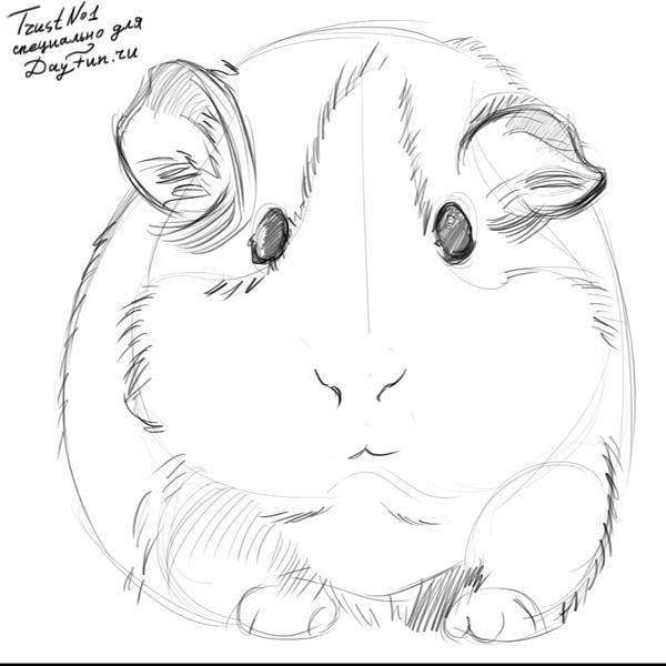 Drawn guinea pig  to step pig TBT