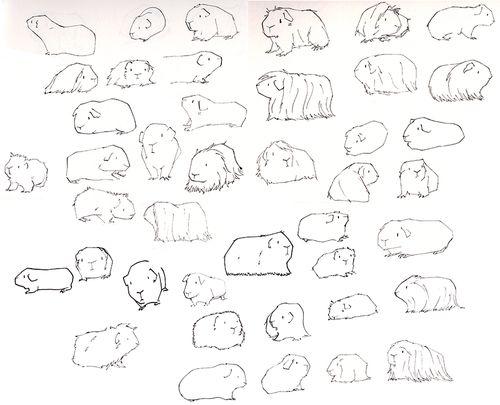 Drawn guinea pig clipart Pesquisa more  How Pinterest