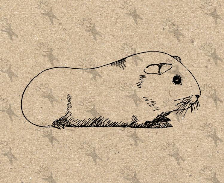 Drawn guinea pig clipart Pig printable Vintage transfer image