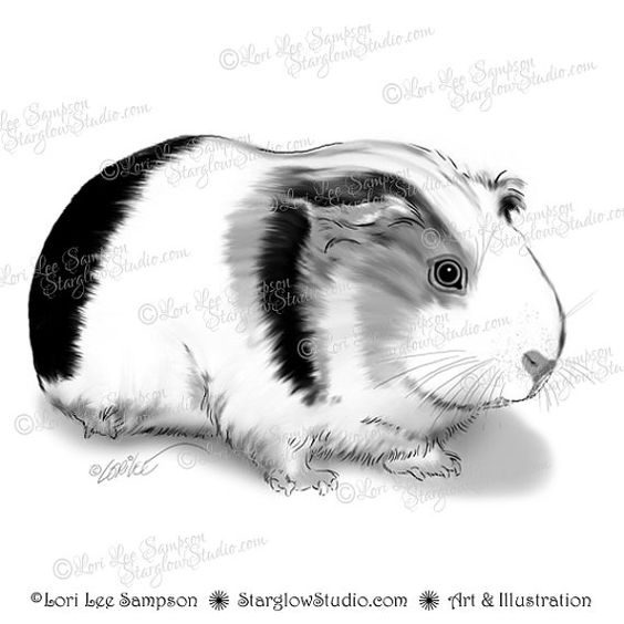 Drawn guinea pig clipart Download Drawing Guinea Pig Pig
