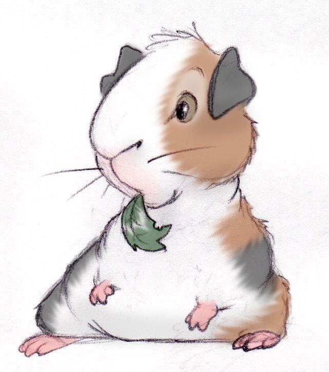 Drawn guinea pig clipart Pig Guinea Pig Pinterest ~ShoJoJim