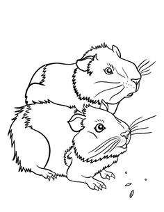 Drawn guinea pig clipart Http://coloringcafe Printable Pinterest guinea Fussel