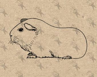 Drawn guinea pig clipart Printable Guinea transfer Pig fabric