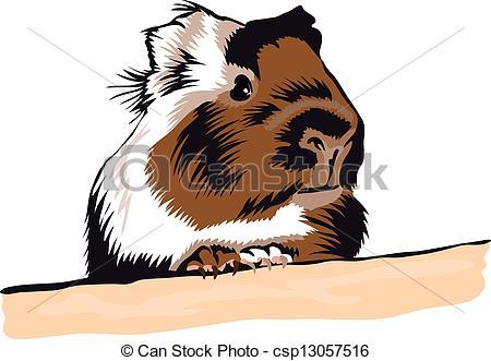 Drawn guinea pig clipart Guinea Guinea Search Pig csp13057516