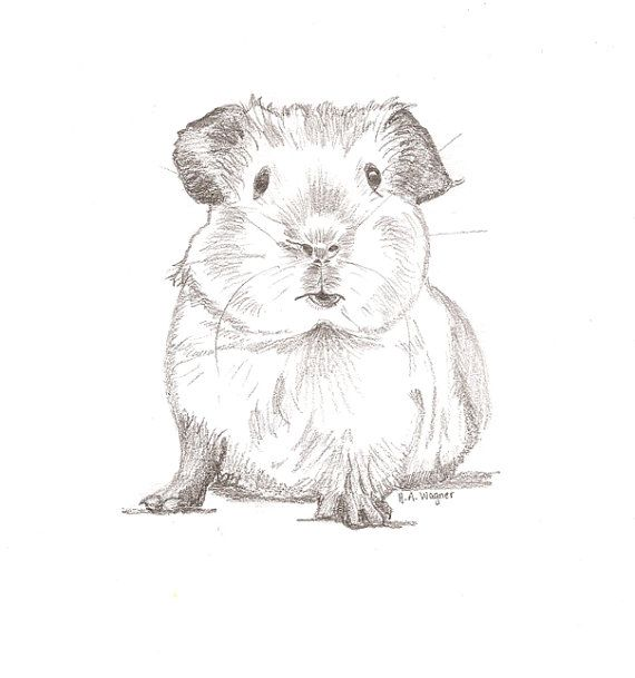 Drawn rodent awesome Pig art/animal 25+ Pig pencil