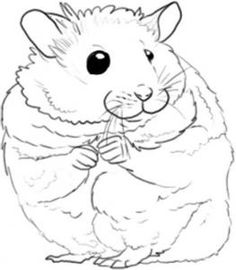 Drawn hamster And Draw Drawings to a