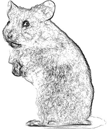 Drawn hamster  etc Gallery Image Hamster